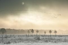 Großes-Torfmoor-im-Winter