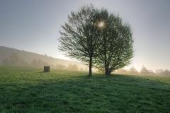 Mystischer-Morgen