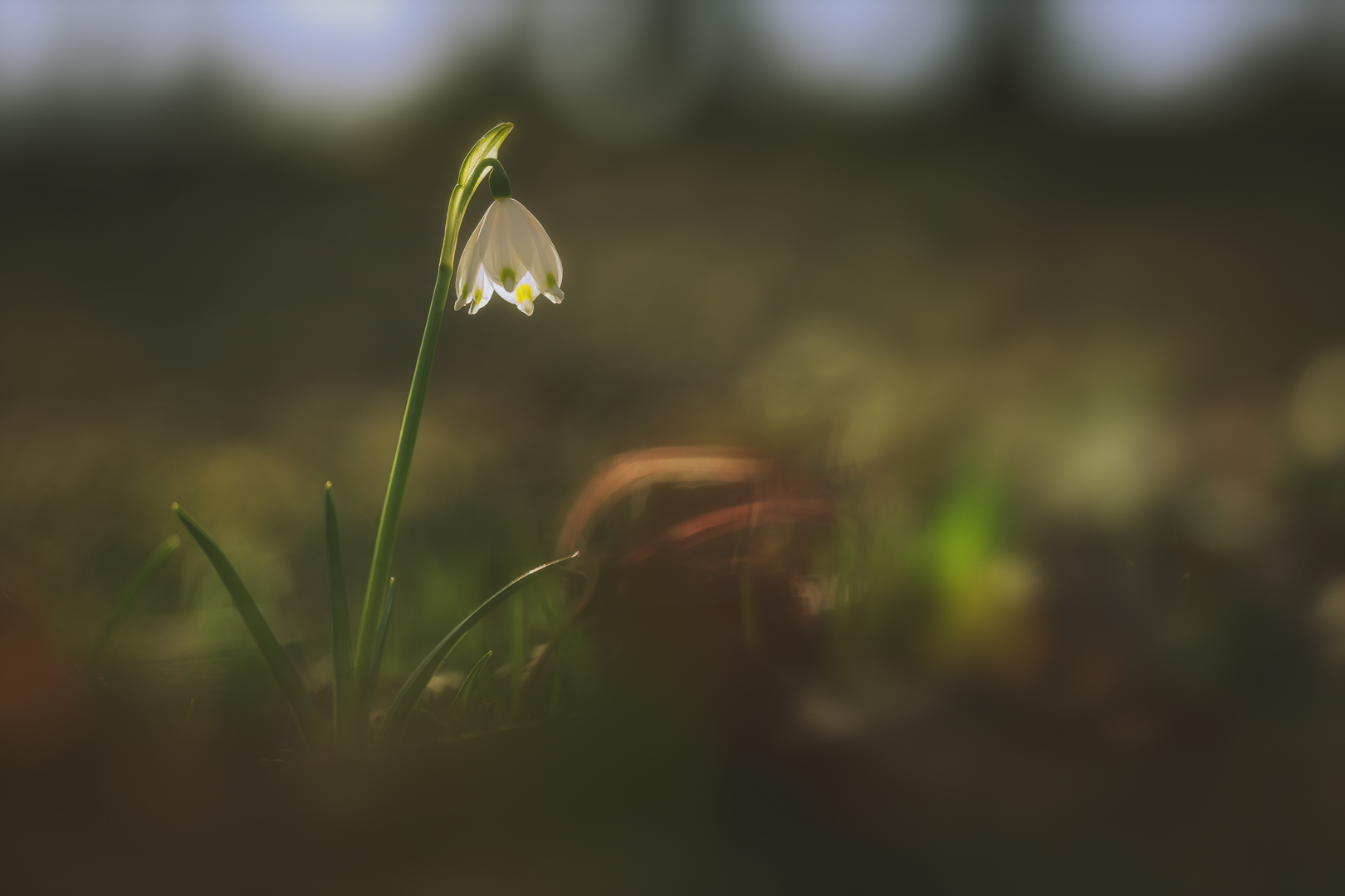 Frühlingserwachen - © Thomas Häusler