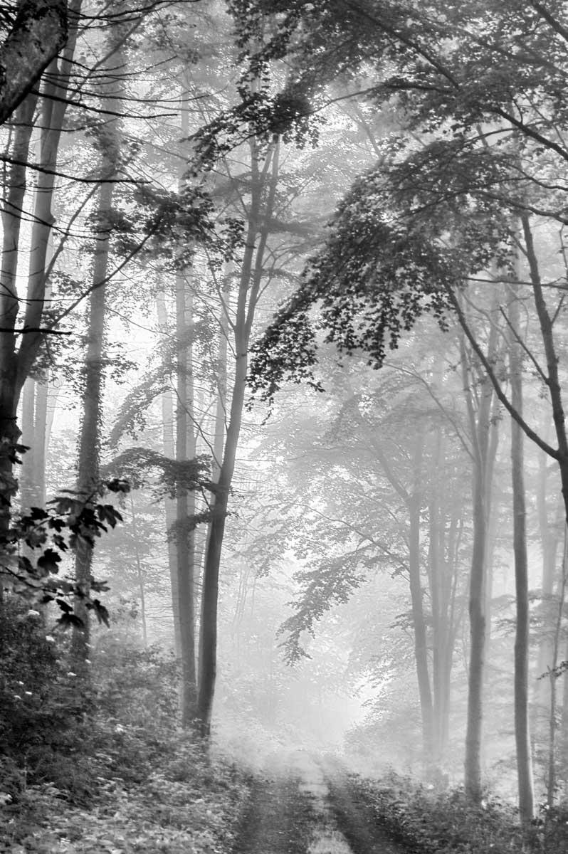 Waldweg im Nebel.