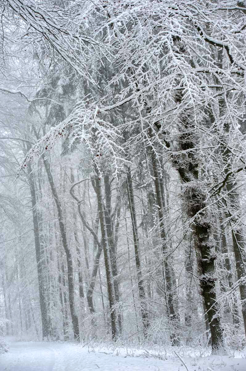 Waldweg bei Schnee.
