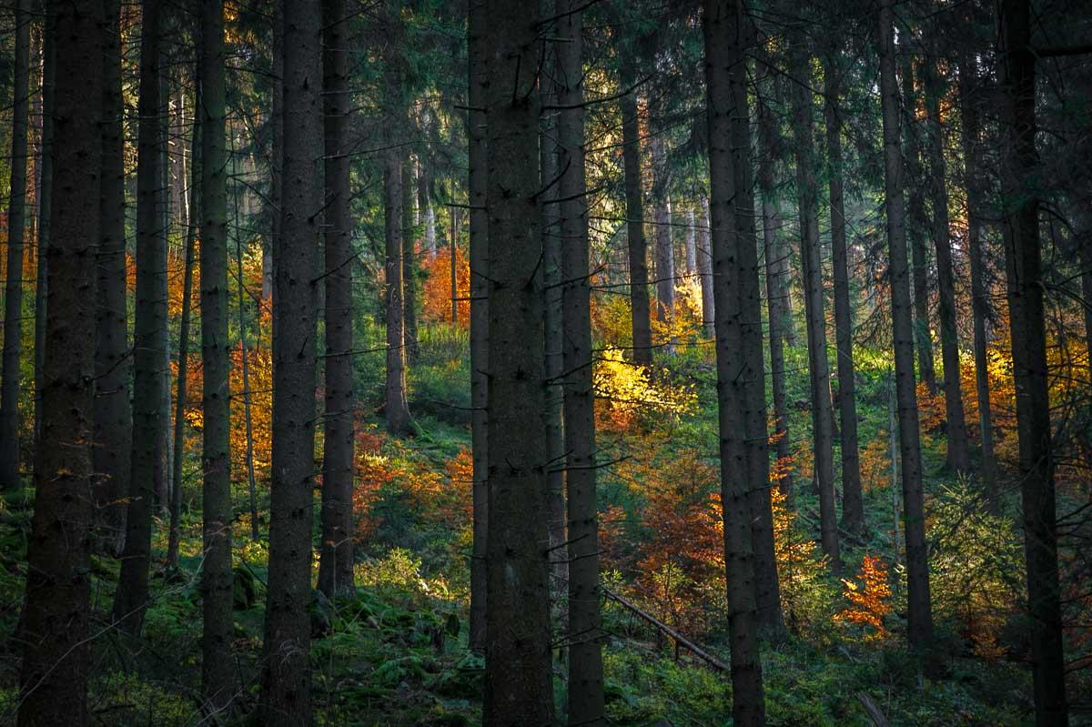 So wie wir den Herbst kennen, bunt und farbenfroh.