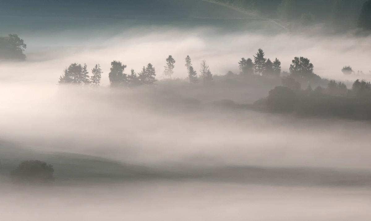 Der Wald lieg im Nebel.