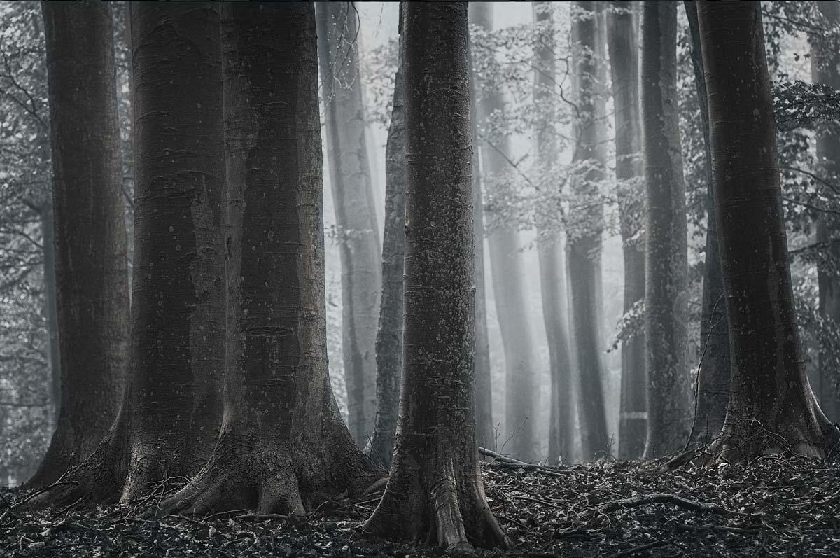 Majestäten im Wald.