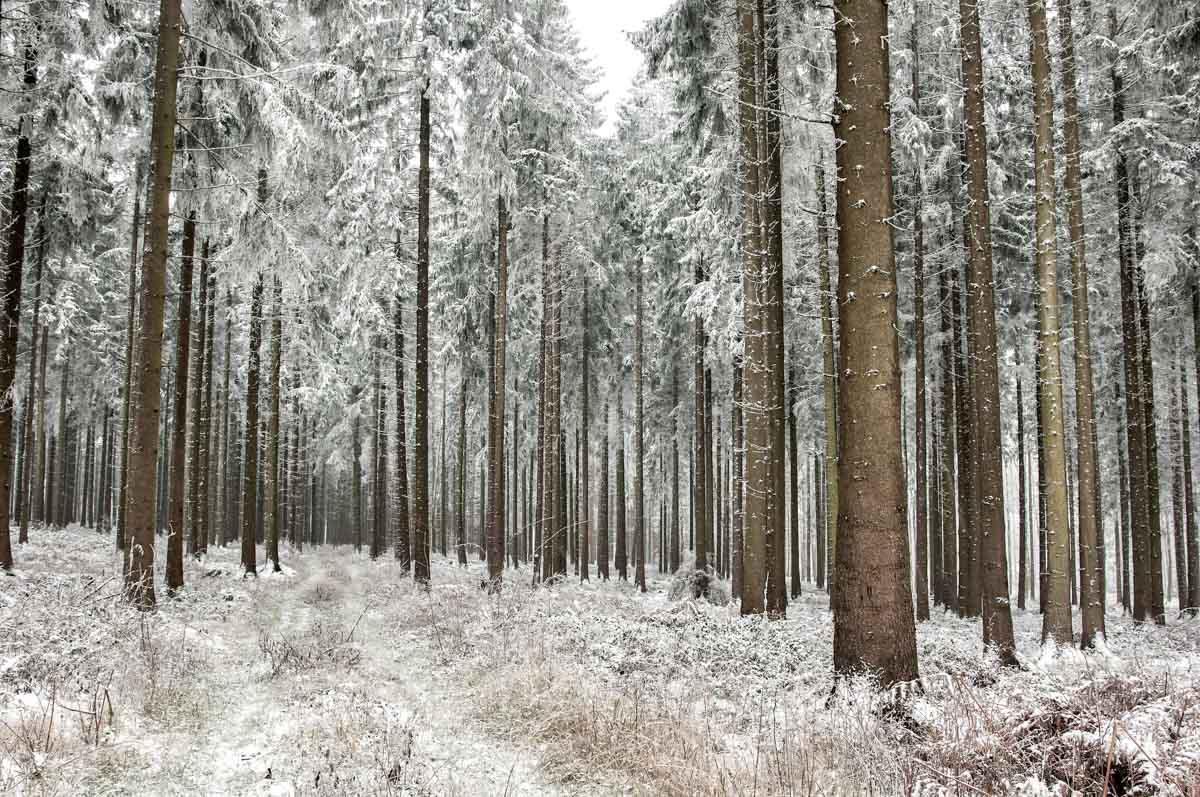 Der Schnee verzaubert den Wald.