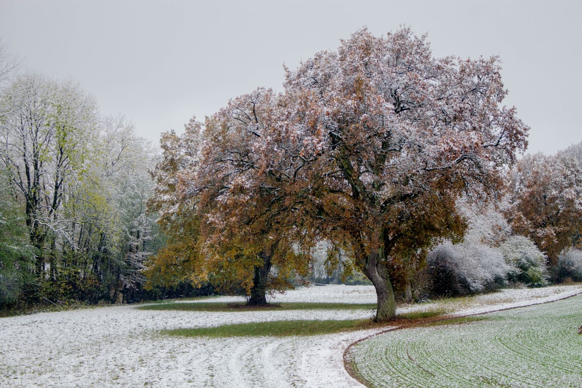 Der erste Schnee – © Norbert Hofmann