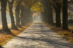 Die Haustenbecker Allee im Herbst - ©Karsten Niehues