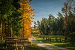 Herbstspaziergang in der Wistinghauser Senne - © Thomas Häusler