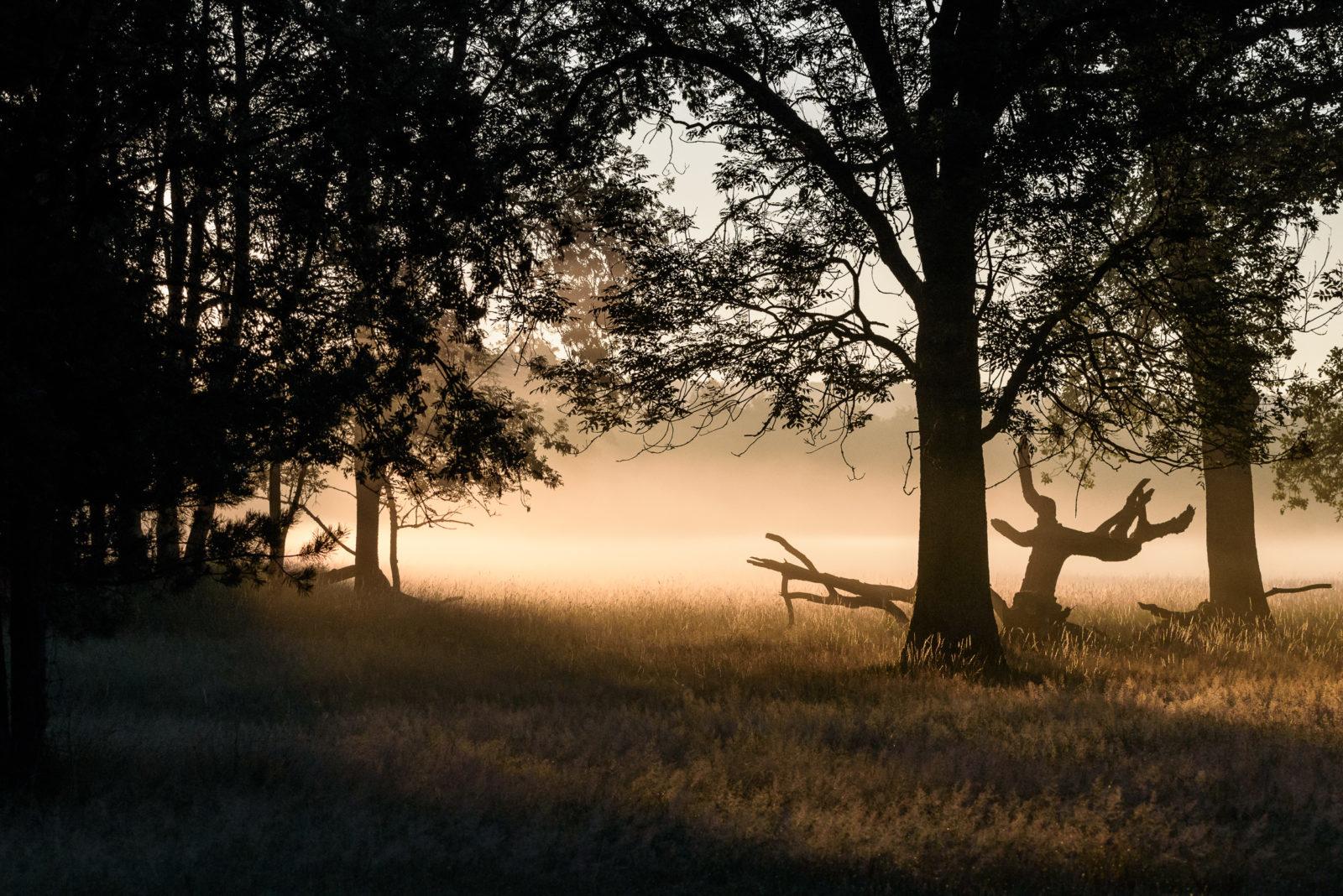 Nebel und Gegenlicht in der Senne - © H.J. Schalski