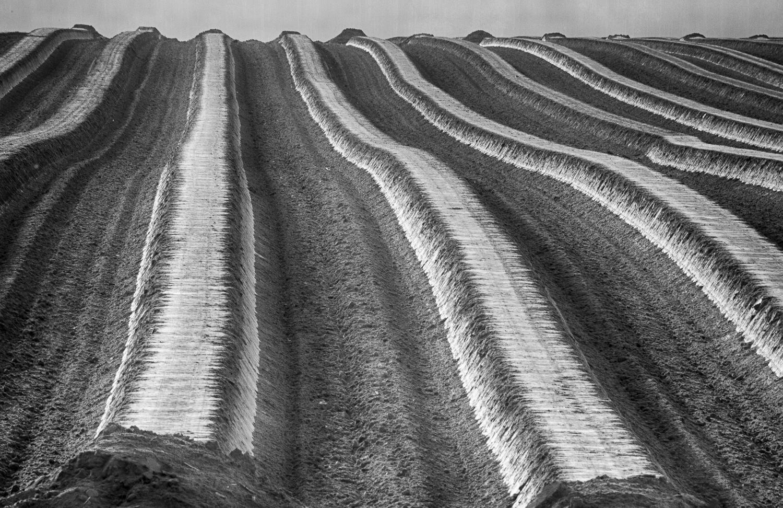 Die Pottenhauser Spargelreihen warten auf die neue Saison… © Gerhard Tegeler
