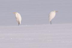 Pas des deux in weiß © Karsten Niehues