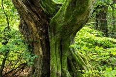 Tanz der Bäume