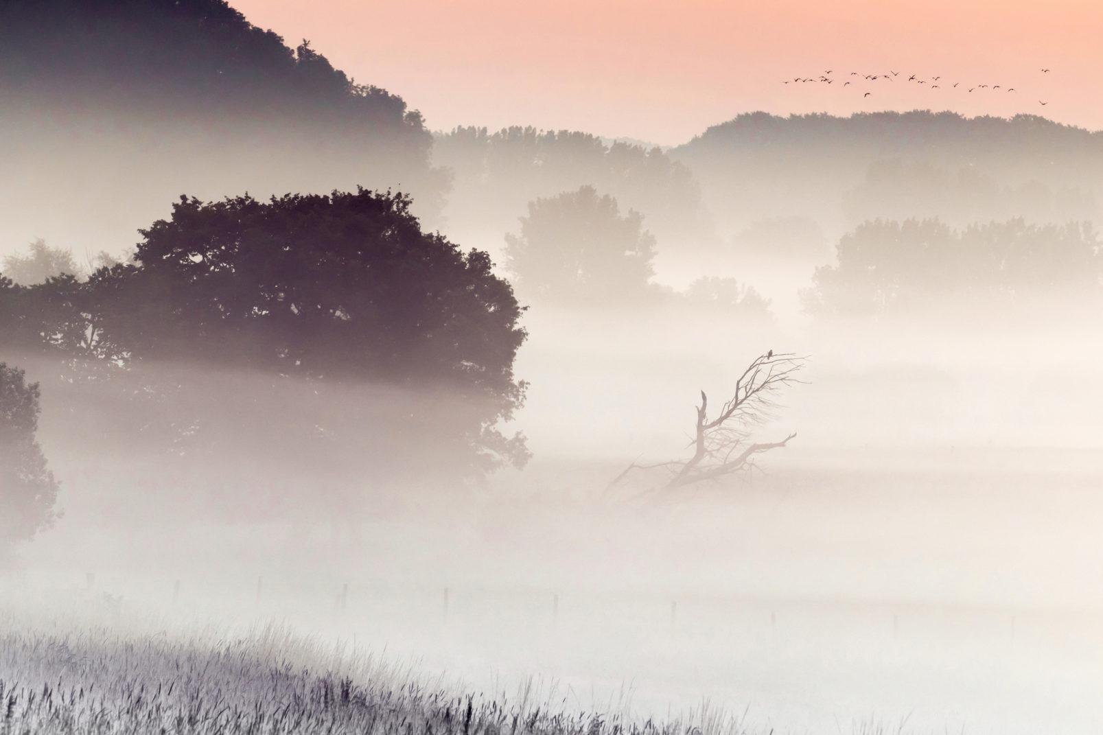 Frühmorgens, wenn der Nebel die Felder bedeckt. © Heike Reineke