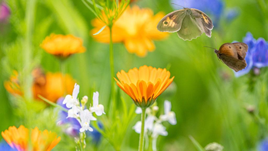 Die Wildblumenwiese © Hans-Jürgen Schalski