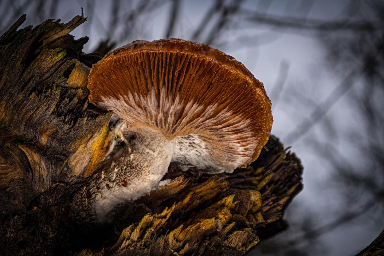 Schimmel-Pilz © Karsten Niehues