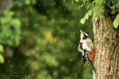 """""""Ja regnet's schon wieder"""" © Bruno Bolli"""