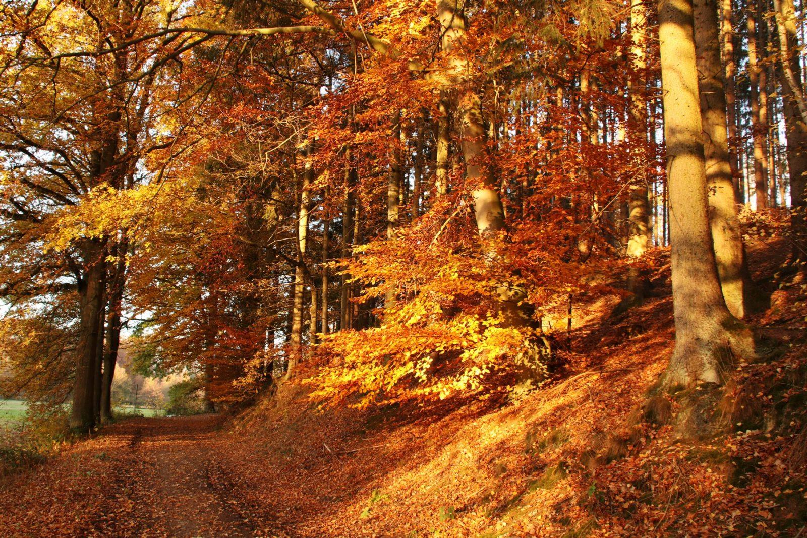 Herbstspaziergang im Passadetal Voßheide © Renate Mahnert