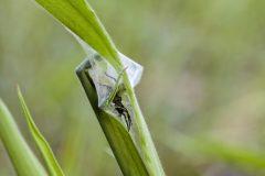 Spinneneier © Heike Reineke