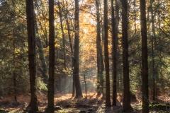Herbststimmung im Pottenhauser Wald © Gerhard Tegeler
