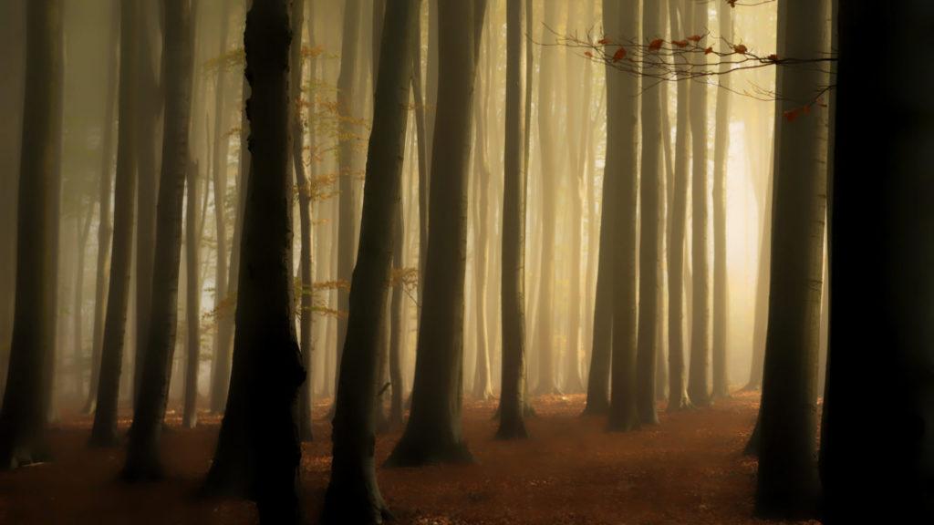 Nebel im lippischen Buchenwald © Hans-Jürgen Schalski